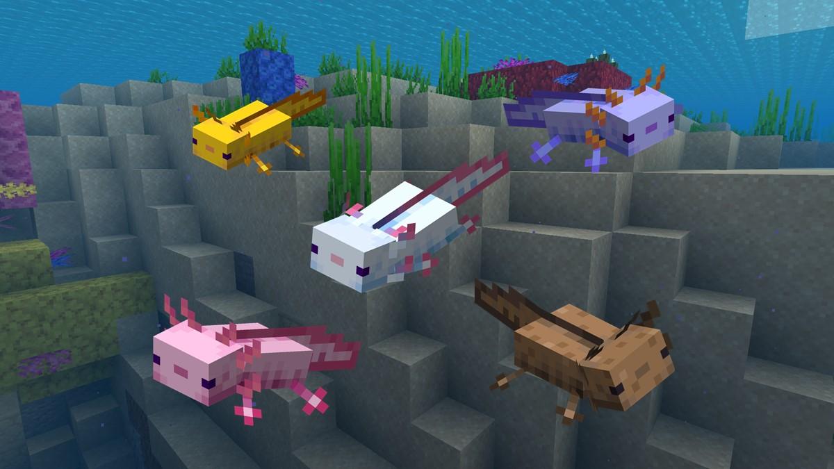 Couleurs axolotl